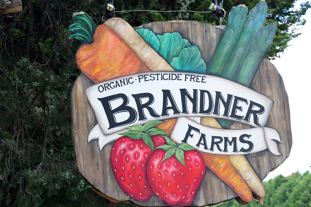 Brandner Farms logo